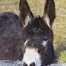 I,m all ears by EUNAN SWEENEY