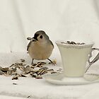 Bird with Cup o' Seeds  ll by Margie Avellino