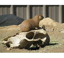 The Prairie Dog's Conquest Photographic Print