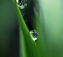 Raindrops on Grass by yolanda