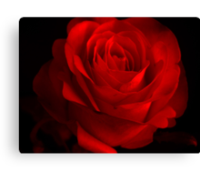 One Rose Red. Canvas Print