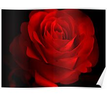 One Rose Red. Poster
