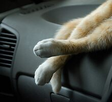dashboard snooze by ozzzywoman