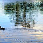 Gympie duckponds.  by Amy Bowman