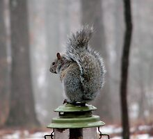 A Little Bit Squirrelly  by NatureGreeting Cards ©ccwri