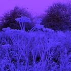 Winter Weeds by sweeny