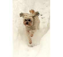 Hop Dog Photographic Print