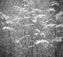The Snow Between David and Bettie's by BCallahan