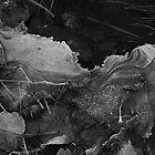 Leaves Frozen in Ice by Aaron Minnick