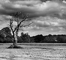 Old Tree by Cyrusdvirus