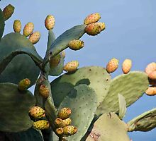 Prickly Pear Cactus by phil decocco