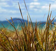 Tasmanian Reeds by Andy Sinclair