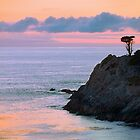 Cypress Tree, Headland Cove, Point Lobos by Maria Draper