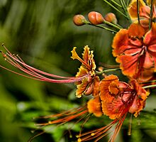 Tropical Flowers by Tracey  Dryka