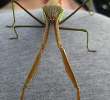 Mantis (1) by hallucingenic