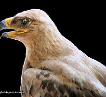 TRUE EAGLES - THE TAWNY EAGLE – *Aquila rapax* by Magaret Meintjes