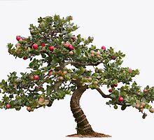Bonsai tree by Roma Czulowska