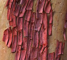Abstract Bark by Mike Norton
