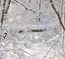 Forest in winter by mltrue