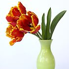 three parrot tulips in green vase by OldaSimek