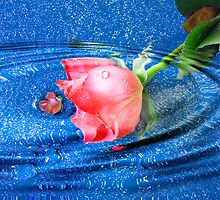 one rose within a teardrop by Joyce Knorz