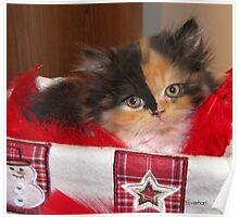 Seasons Greetings Christmas Calico Persian Kitten  Poster
