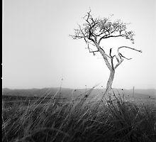Loneliness  by Alex Iacob