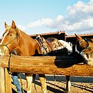 Horses In Arizona by Elizabeth  Lilja