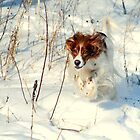 A Romp in the Snow by Robin Webster