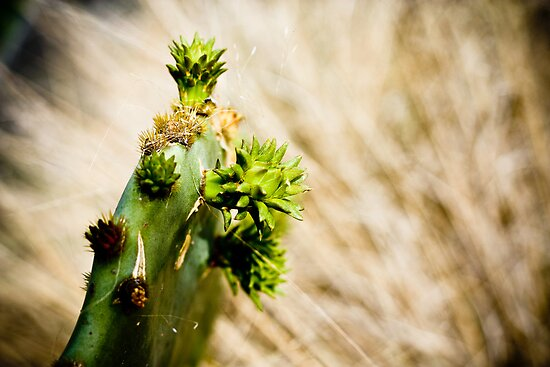 A Spring Sprouting Cactus by SESE