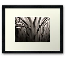 Cactus Bloom in Sepia Framed Print