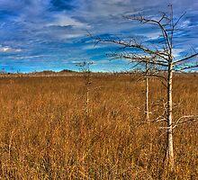 Everglades Winter by njordphoto