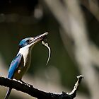 Sacred Kingfisher by Jeremy Weiss