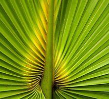 Center of the Palm by Rosalie Scanlon