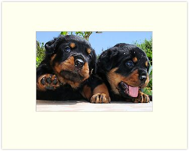 "Rottweiler ""Hi Five"" by taiche"