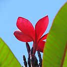 Dark Red Petal Solace by Martice