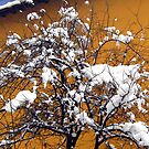 A tree in winter by Maria1606