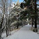 Go for a Winter Walk by HELUA