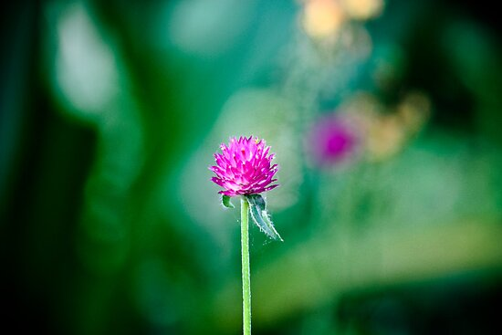 One - Single - Lone Flower by SESE