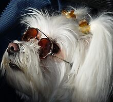 Aren't I Cool? by Linda Gregory