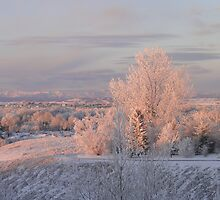 The Morning Frost by Al Bourassa