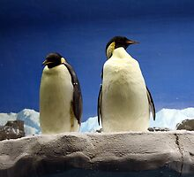 Emperor Penguins by Scatterdragon
