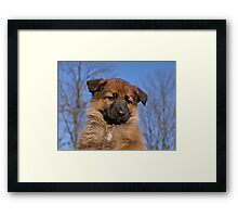 Sable Puppy Framed Print