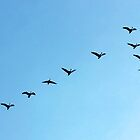 Flying Geese #1 by brucecasale