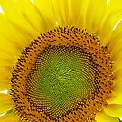 Always On The Sunny Side by NatureGreeting Cards ccwri