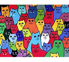 The Cat Pack Photographic Print