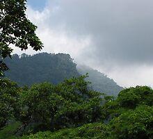 Henri Pittier National Park by Cristóbal Alvarado Minic
