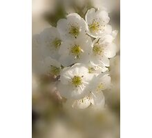 Fragrance In White_2 Photographic Print