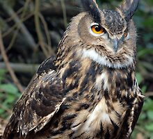 Eagle Owl on a forest floor by purpleharrier