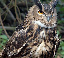 Eagle Owl on a forest floor by purpleharrier